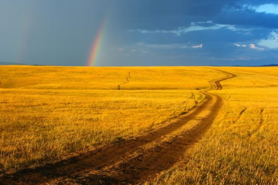 Golden field with a track leading to a rainbow