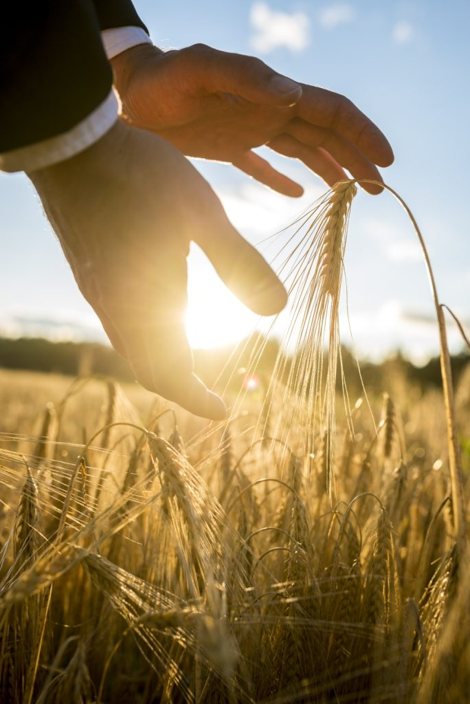 A businessman touches some crops